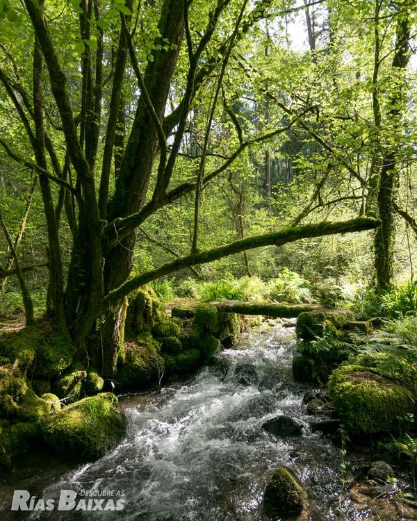 Pontella no río Couso
